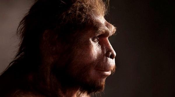 Hay una especie de homínidos que vivió casi nueve veces más que nosotros