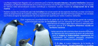 Descubrimos un regalo bajo el agua; ya nació Alex, el primer Pingüino Chilango