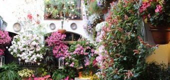 Los patios de Córdoba son patrimonio cultural inmaterial de la humanidad y siguen vigentes